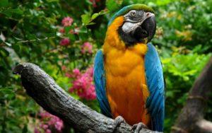 коллекция попугаев Тенерифе