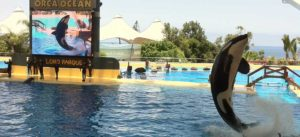Лоро-парк Тенерифе Зоопарк
