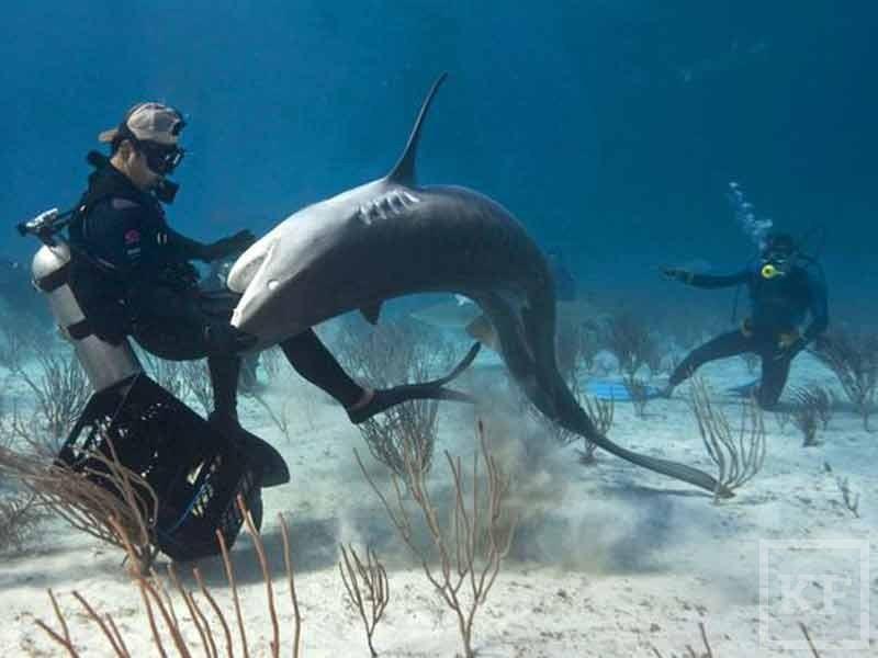Акулы Египет